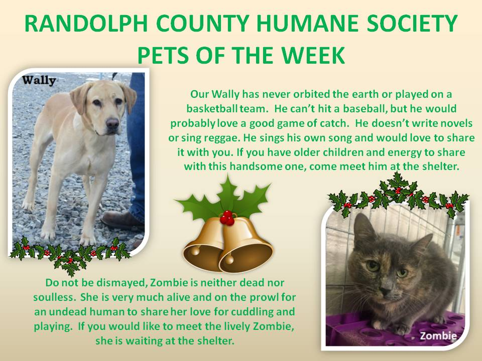 This image has an empty alt attribute; its file name is RANDOLPH-COUNTY-HUMANE-SOCIETY-70.jpg