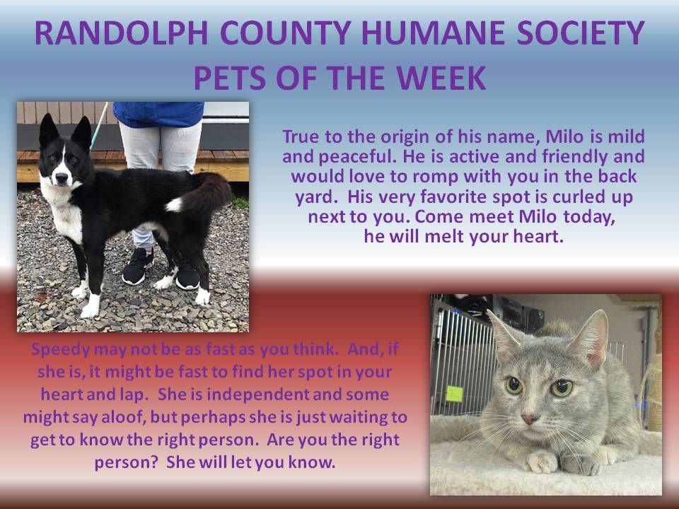 This image has an empty alt attribute; its file name is RANDOLPH-COUNTY-HUMANE-SOCIETY-71.jpg