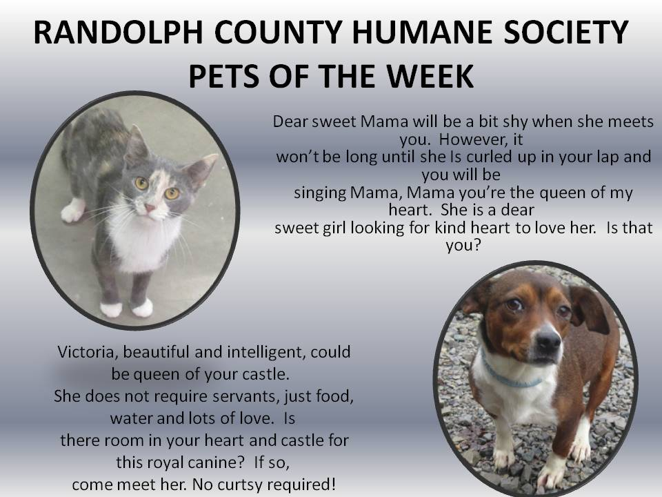This image has an empty alt attribute; its file name is RANDOLPH-COUNTY-HUMANE-SOCIETY-73.jpg