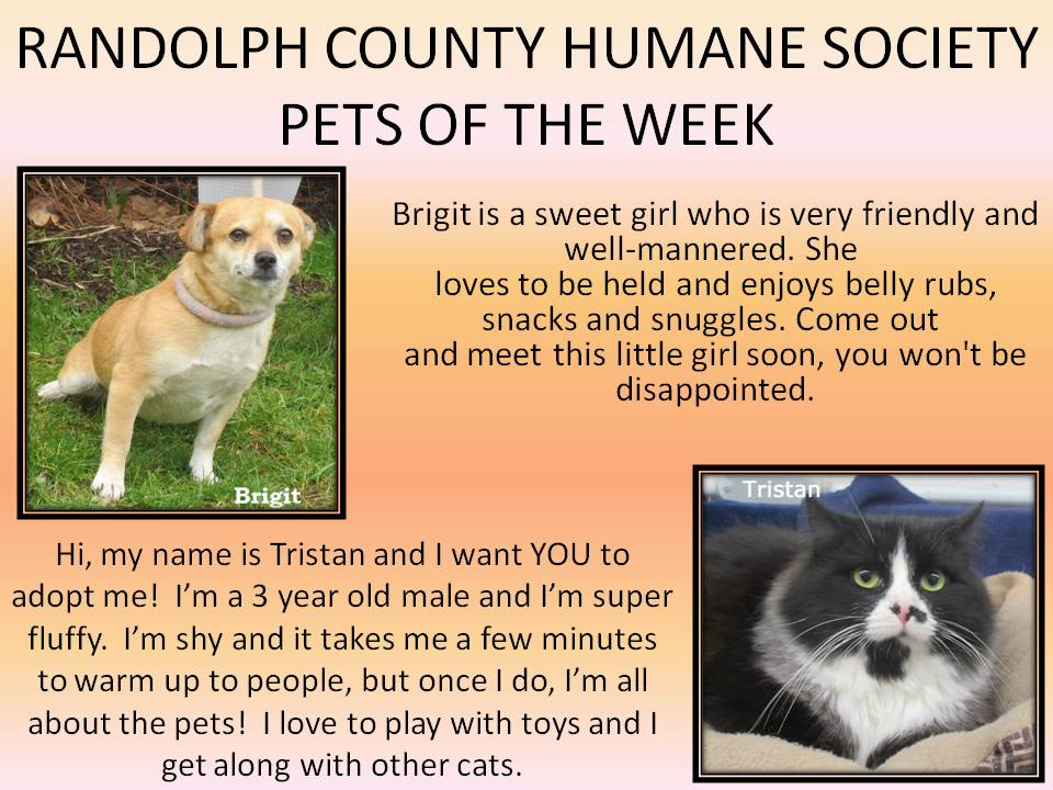 This image has an empty alt attribute; its file name is RANDOLPH-COUNTY-HUMANE-SOCIETY-76.jpg