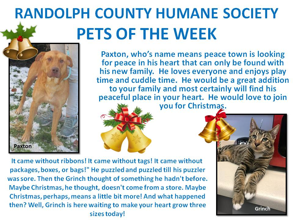 This image has an empty alt attribute; its file name is RANDOLPH-COUNTY-HUMANE-SOCIETY-PETS-OF-THE-WEEK-18.jpg